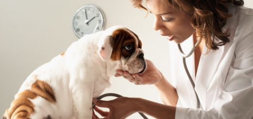 veterinarian-feature-image