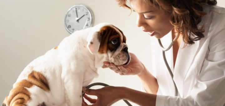 veterinarian-feature-image