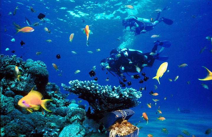 aquatic-life-in-animal-sciences