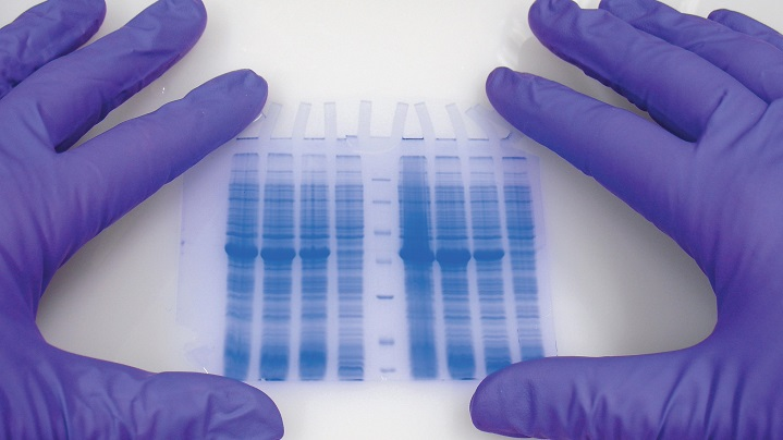 biochemistry-studies