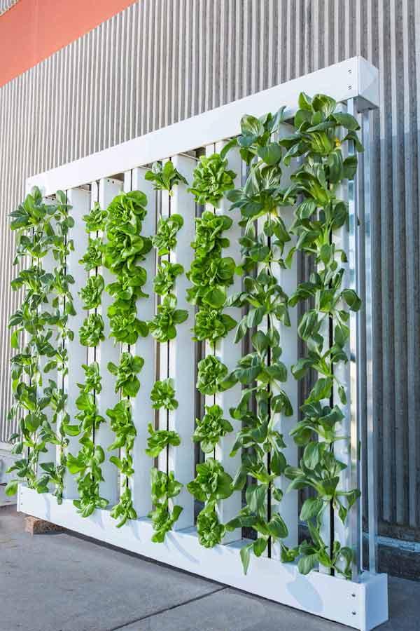 farming jobs, hydroponics, hydroponic farming, farm jobs