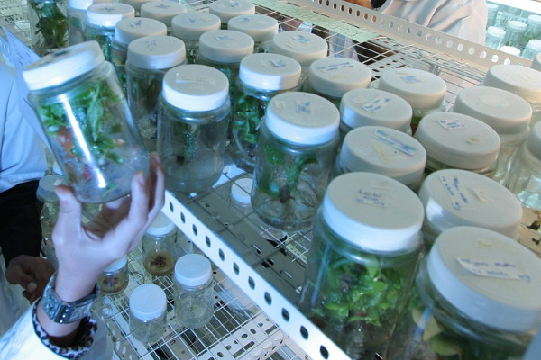 Do you want to become an agricultural scientist?