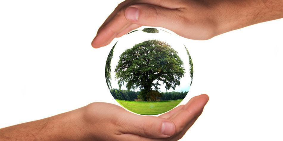 Become An Ecologist | Job Mail